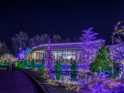 G. Stanley - 2015 Festival of Lights - Visitor Center - Washington, DC Mormon Temple-.jpg